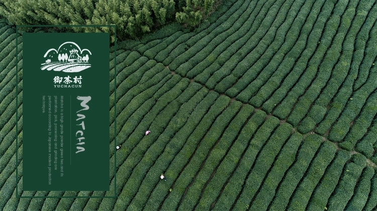 SHAOXING ROYAL TEA VILLAGE CO.,LTD