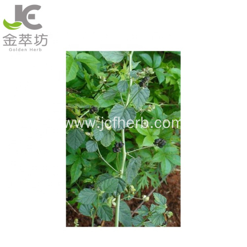 psoralea corylifolia Linn extract Bakuchiol Oil 98%