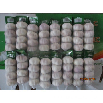 Best Quality Normal White Garlic