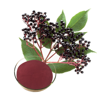 Sambucus nigra elderberry extract for immune support
