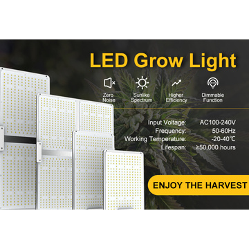 Highest Yielding LED Grow Light 2020