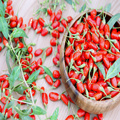 Health nutritional  traditional herbal Goji Berry