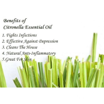100% Pure Organic Citronella Essential Oil Bulk
