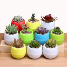 1pcs Colorful Colourful Mini Round Plastic Plant Flower Pot Garden Home Office Decor Planter Garden Tools Pots For Plants Seeds