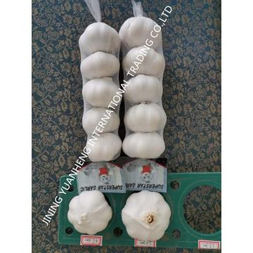 Fresh pure white /normal white  chinese garlic