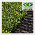 Carpet Grass Price for Golf Course