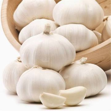 Normal White Garlic Small Packing