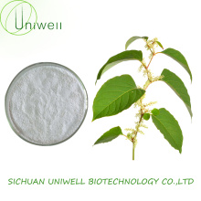 Natural Polygonum Cuspidatum Extract Resveratrol 98% Powder