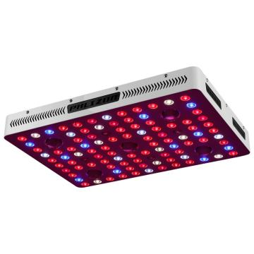 2500w COB LED Grow Moli mo oona