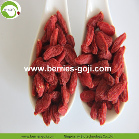 Factory Supply Fruit Premium High Standard Goji Berries