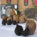 Organic fermented solo black garlic