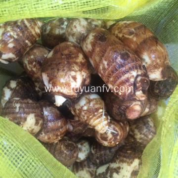 Shandong Anqiu Fresh Taro with Good Taste