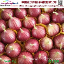 Fresh Natural Nutritional Tasty Self-planted Sweet Fig