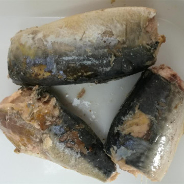 Canned Mackerel Fish in Round can in Oil