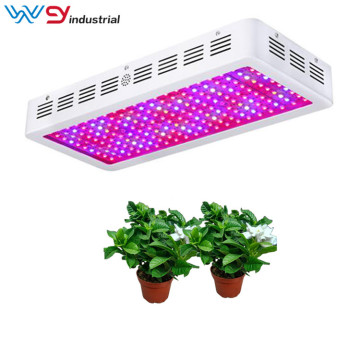 Growing tomatoes with 2000w grow lamp