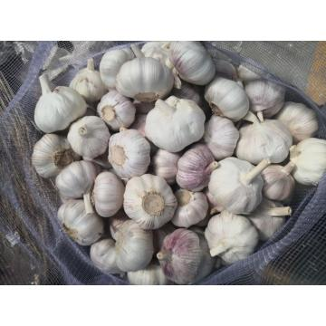 Cold Storing Garlic High Quality