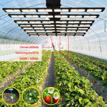Grow Light 1000W LED Strips for HousePlants