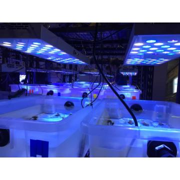 LED Lights for Growing Coral in Marine Aquarium