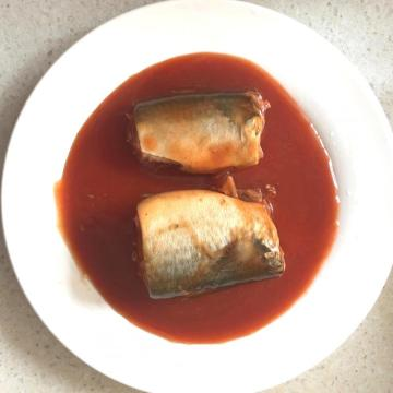 Canned Mackerel Fish In Tomato Sauce Hot