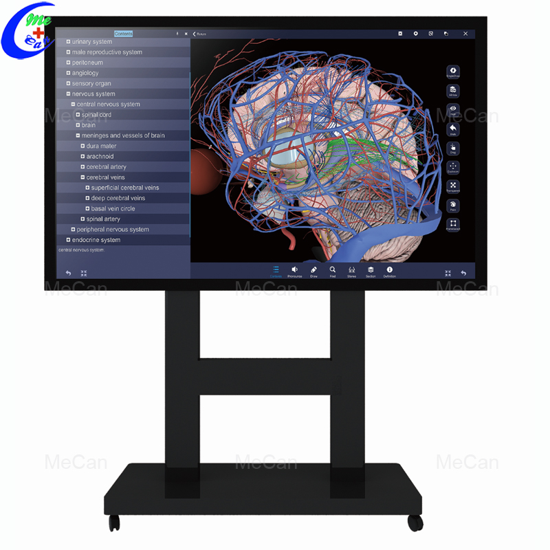 88-55-inch-Touch-Screen-3D-Anatomy
