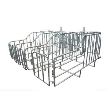 Various Size Galvanized Sow Gestation Crates For Pig