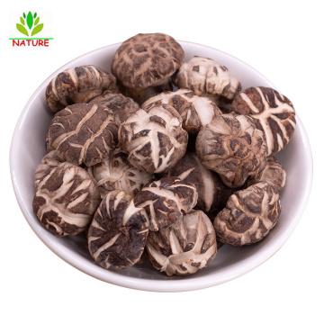 Shiitake Mushrooms Dried & Cut, Grade AAA Premium Quality