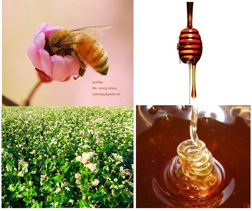 bulk sale raw natural and pure amber honey