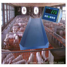 Animal Scale for Weighing Live Animals