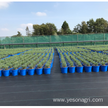 PP Agricultural Weed Mat