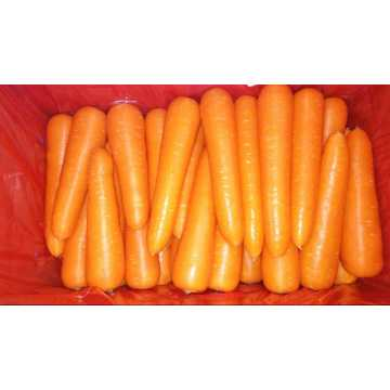 2020 New Crop Carrot Hot Selling
