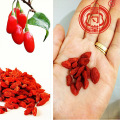 Dried Wolfberry Goji Berry Red Fruit