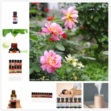 Water Soluble Camellia Essential Oil Relieve Stress for Humidifier Fragrance Purifying Air Fragrance Aromatherapy Essential Oil