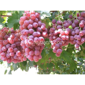 new fresh red grapes