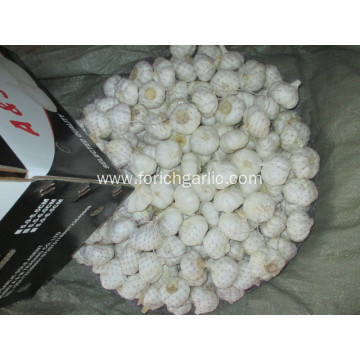 Pure White Garlic 2020 Size 5.5cm