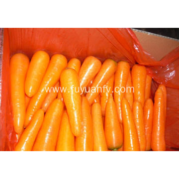 New crop fresh healthy carrot for sale