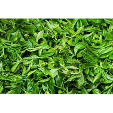 Organic Bulk wholesale Japan Green Tea Bancha