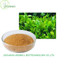 Green Tea Extract Tea Polyphenols 30%-98% EGCG 5%-60%