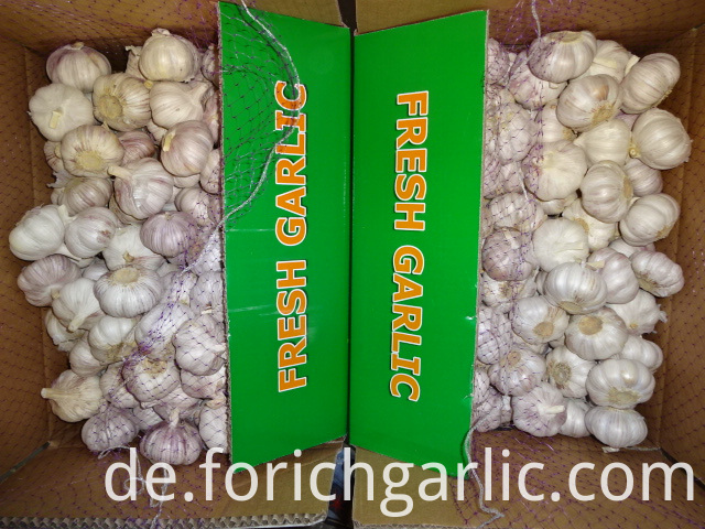 Good Quality Normal White Garlic
