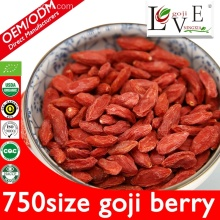 Free Sample 750granule/50g Goji Berry With Low Price