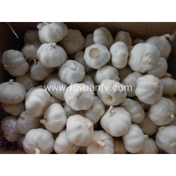 best quality garlic for export