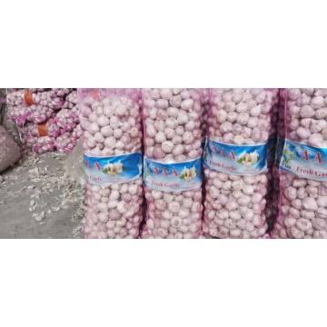 Direct garlic origin place good price