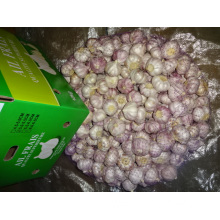 Fresh Normal White Garlic Top Quality New Crop
