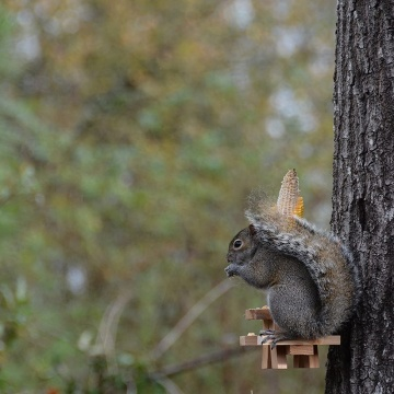 Funny Gag Feeders Novelty, Picnic Table Squirrel Feeder