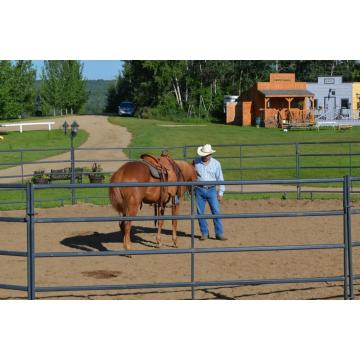 steel pipe galvanized used horse fencing for sale