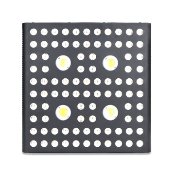 Custom Cree Grow Light Powerful 2000W