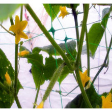 HDPE plant supporting net for cucumber