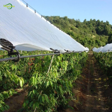 PE clear plasic rain cover for cherry
