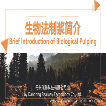 Rice Straw Pulp Making Biological Method Pulp
