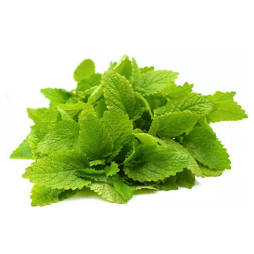 lemon balm leaf extract Capsule benefits