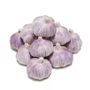 Export Chinese fresh garlic high  quality garlic wholesale